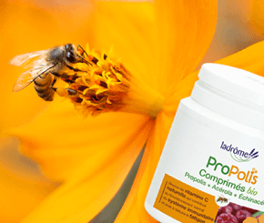 Propolis, un antibiotique 100% naturel