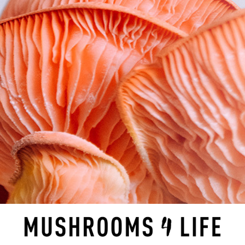 Mushrooms 4 life: de effectiviteit van fungi
