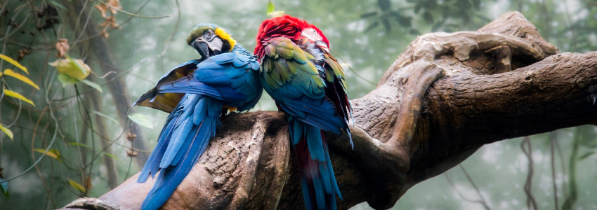 two parrots in the rainforest